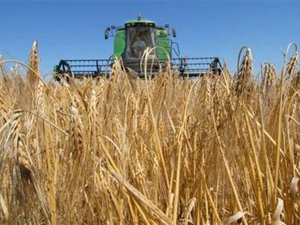 Кабмин утвердил денежный план Аграрному фонду на текущий 2017-й год