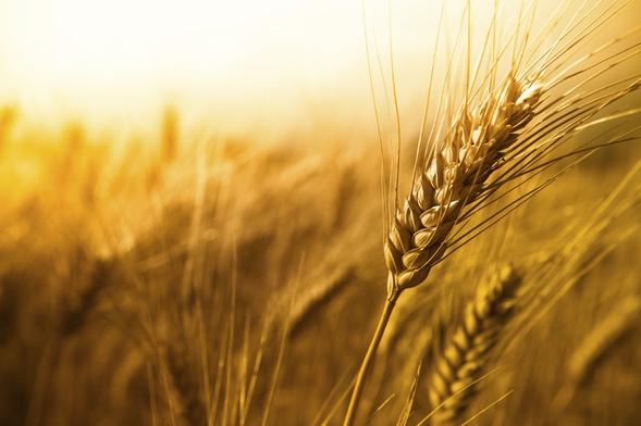 И.о. руководителя  правления национальной  продовольственно-зерновой компании  объявил  обувольнении
